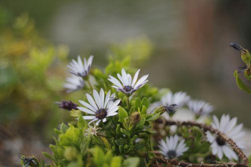 flower green plant