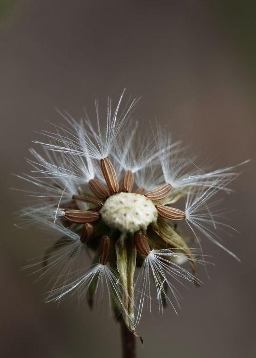 gėlė,ruduo,rudens gėlės,vasaros pabaigoje,poilsis,aukso ruduo,flora,gėlių ruduo