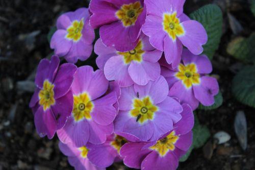flower lila istanbul