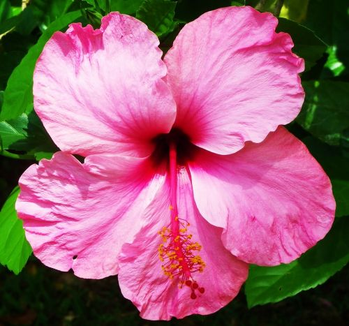 flower pink smell