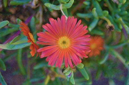 flower orange flower gross floor