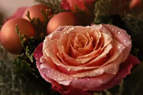 flower nature advent