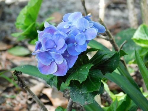flower purple blue