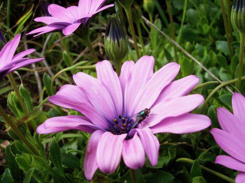 gėlė,skristi,saulėtas