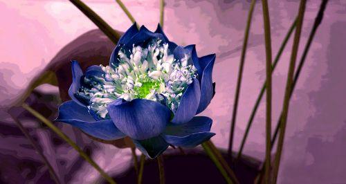 flower decorate background