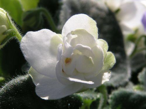 flower daisy flowers
