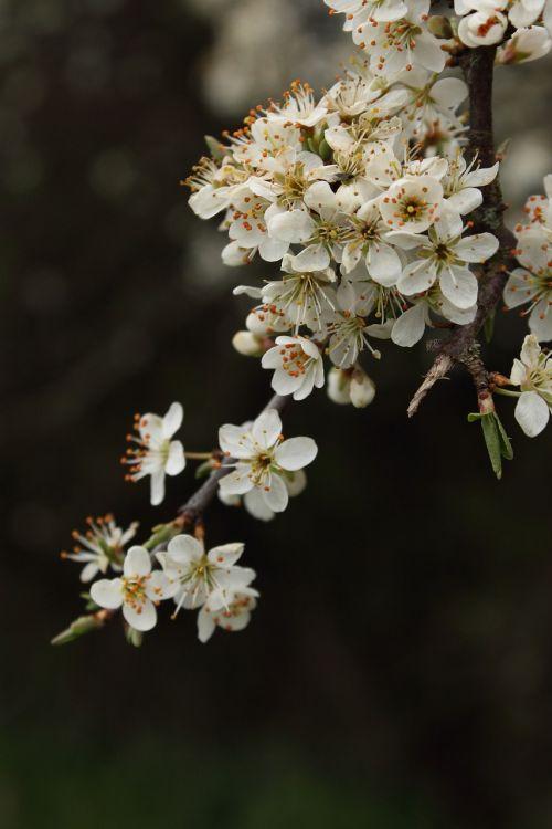 flower flora tree