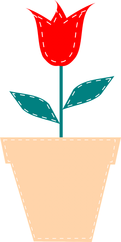 flower plant red