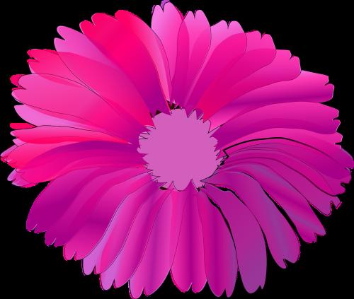 flower pink huge
