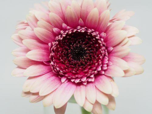 flower petal nature