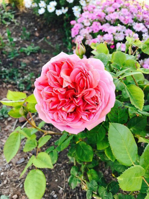flower flora garden