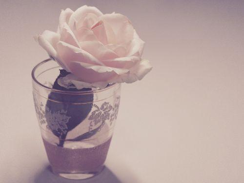 flower vintage rose