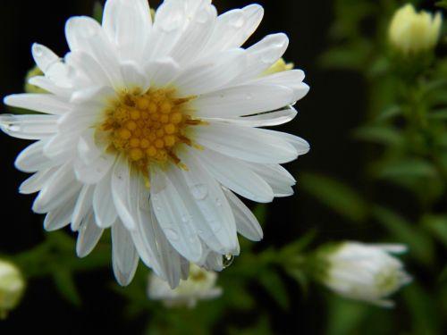 gėlė,sodas,gamta
