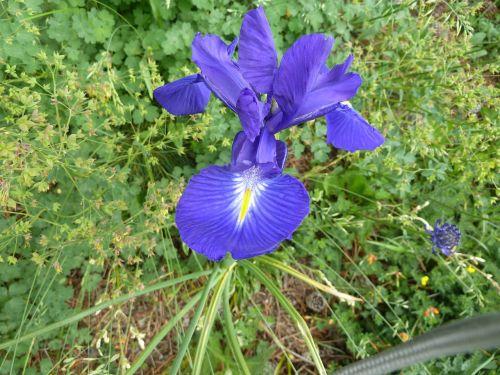 flower nature plant