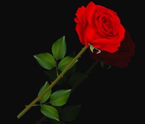 flower rosa love