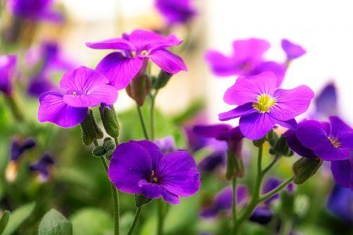 gėlė,augalas,gamta,žiedlapis,sodas,gėlės,lapai