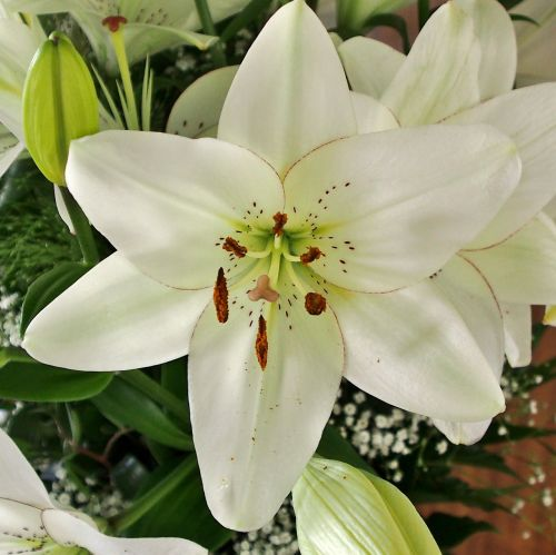 flower nature lily