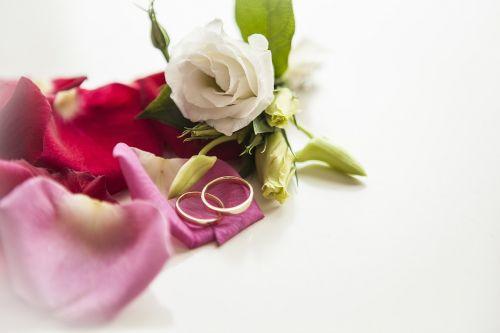 flower rose petal