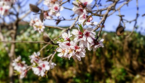 flower tree nature
