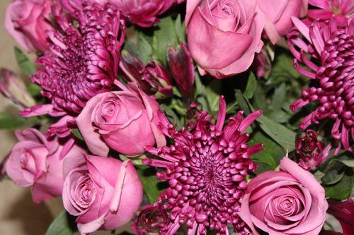 gėlė, flora, gamta, gėlių, žiedlapis, be honoraro mokesčio