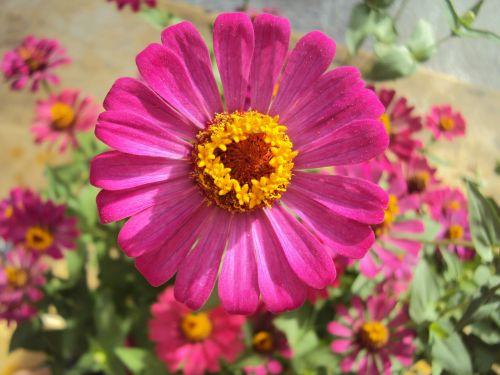 flower my home phan thiet
