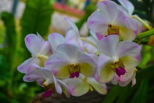 gėlė, flora, gamta, sodas, žydėjimas, orchidėja, orchidėjos, Orchidėja, Balta orchidėja