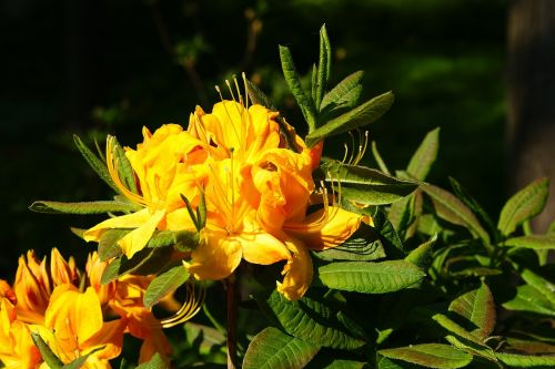 flower yellow plant