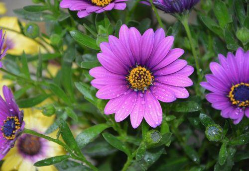 gėlė, gamta, augalas, sodas, pavasario gėlės, spalva violetinė, gėlė buvo, botanikos sodas, romantiškas sodas, be honoraro mokesčio