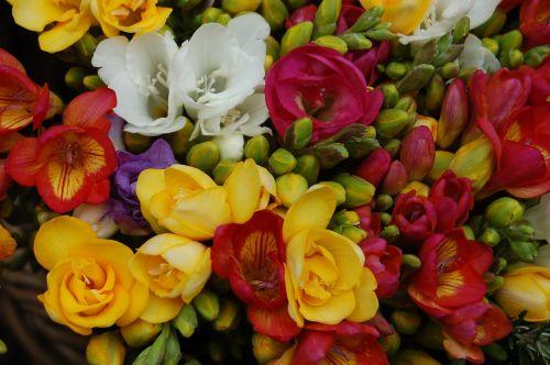 flower available bouquet de fleurs
