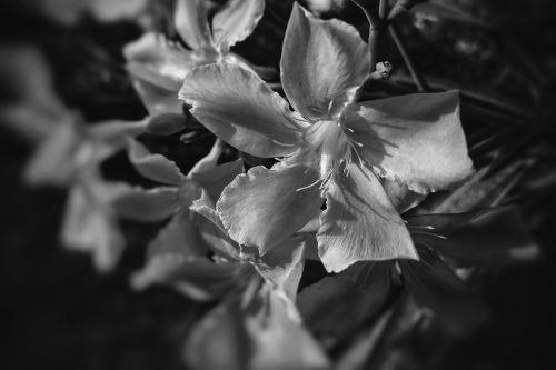 flower leaf flora