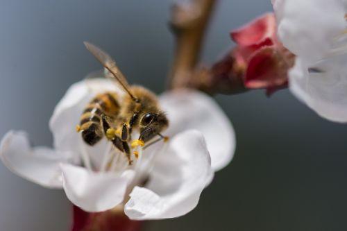gėlė, gamta, bičių, vabzdys, žiedadulkės, apdulkinimas, augalas, vasara, Uždaryti, medus, žiedlapis, spalva, gėlės, lapai, gyvūnas, sezonas, be honoraro mokesčio