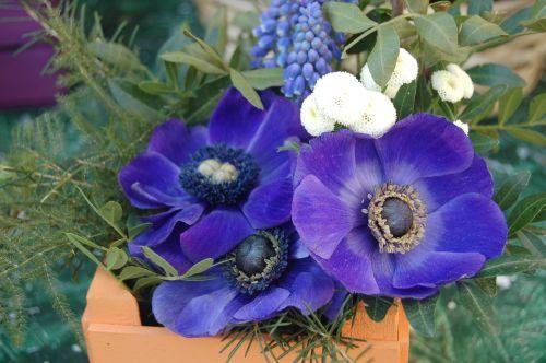 gėlė, gamta, vasara, gėlių kompozicija, gėlių kompozicijos, kompozicija, be honoraro mokesčio
