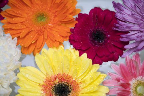 flower flora floral