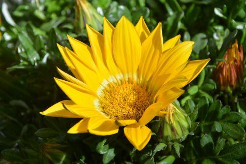 flower yellow flower petals