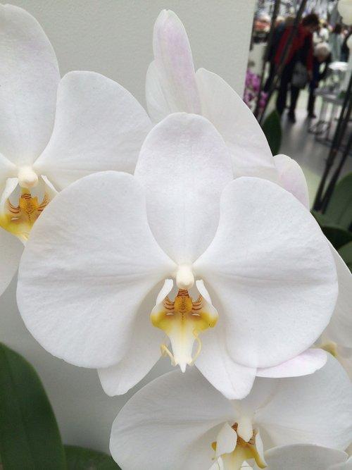 flower  plant  tropical