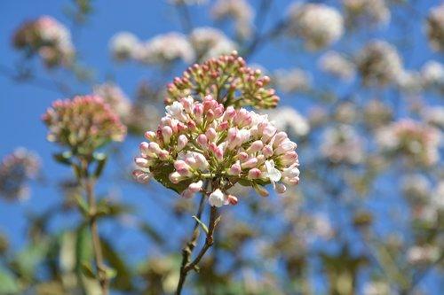 flower  flowering  spring season