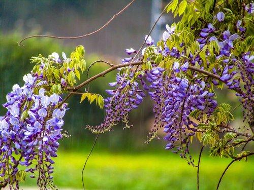 gėlė, augalų, pobūdį, Sodas, žydėjimo, Žiedlapis, parkas, sezonas, pavasaris, gėlių, lauke