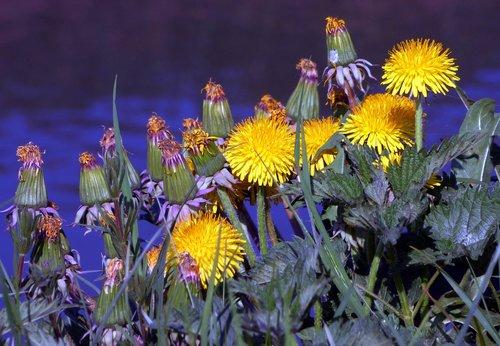 flower  plant  nature