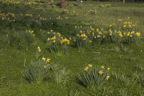 gėlė, žolė, pobūdį, meadow, augalų, gėlės, vasara