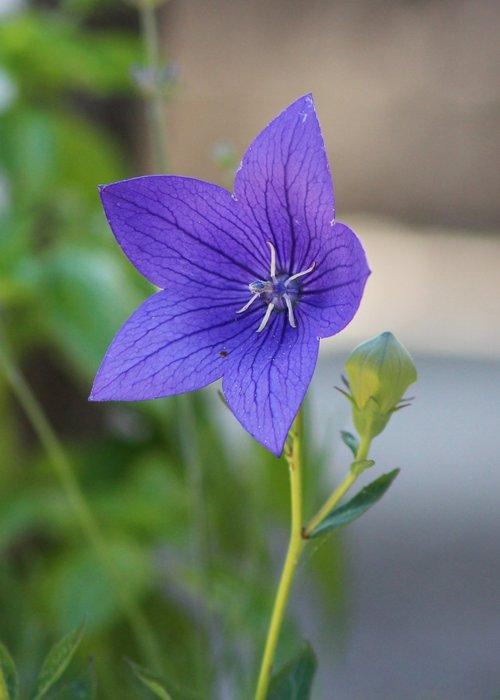 flower  nature  flora