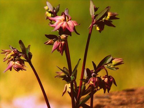 flower  outdoor  nature