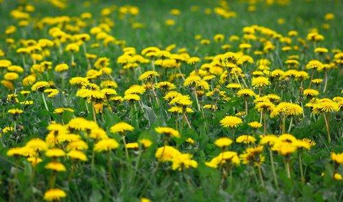 flower  summer  nature