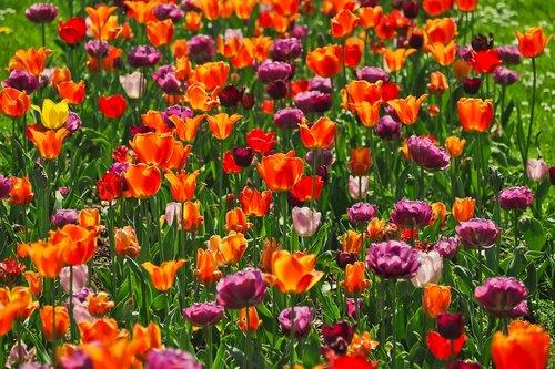 flower  plant  garden