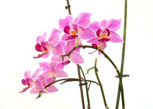 flower  flora  nature