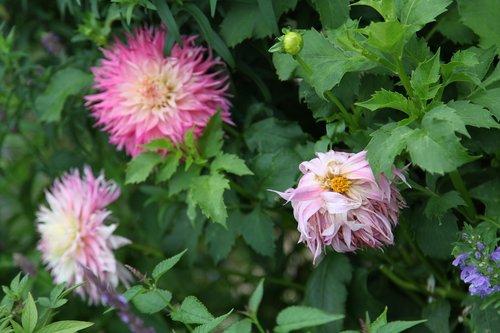 flower  rest  idyll