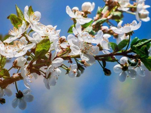 flower  tree  flowering tree