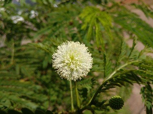 flower  white flower  tranquility