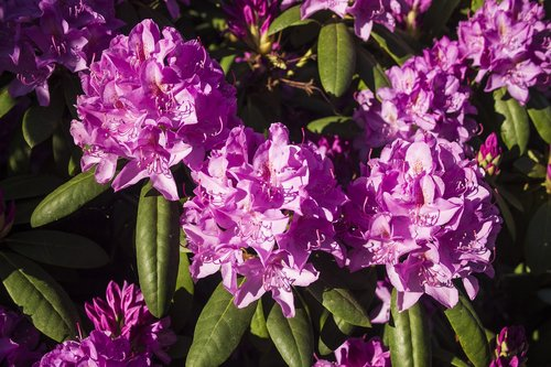 flower  flowering shrub  bright