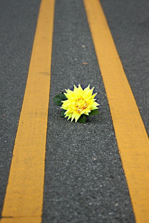 gėlė,geltona,kelias,lauke,lauke,gėlių,spalva,žiedas