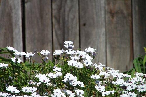 flower  backyard  white